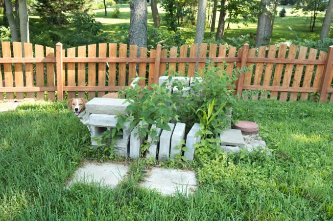 Murphy showing landscape block pile
